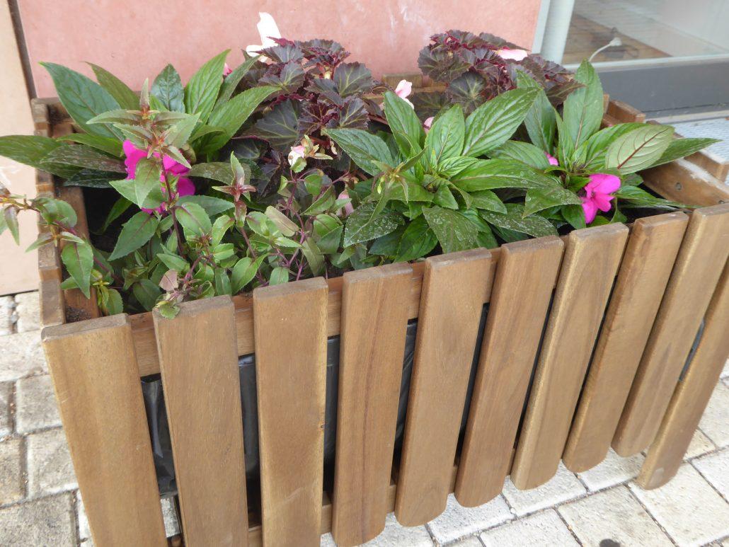 Pflanzen Für Den Balkon Und Kleine Gärten Echo E V